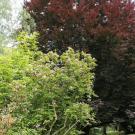 Arboretum Kopidlno